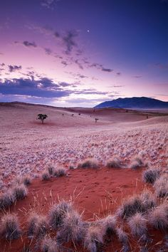 Crushing on pink. Shot of the famous Fairy circles- short taken in Wereldsend Farm, Namib Rand Reserve, Namibia. by Hougaard Malan Beautiful World, Beautiful Places, Namibia, Fotografia Macro, Les Continents, Orange Aesthetic, Safari, Africa Travel, Colour Images