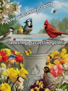 Parrot, Pictures, Animals, Parrot Bird, Photos, Animales, Animaux, Animal, Animais