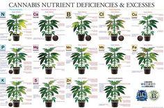marijuana-deficiency-chart-jorge-cervantes.jpg (4000×2658)