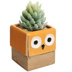 Novelty Orange Owl Face Design Ceramic Succulent Planter Plant Flower... ($9.99) ❤ liked on Polyvore featuring home, home decor, patio planters, ceramic planters, owl home accessories, succulent planter and orange home accessories