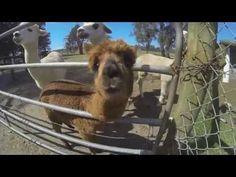 Adventure at Oakvale Farm & Fauna World! Australia