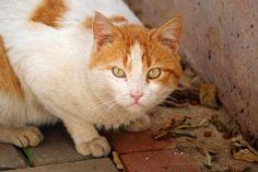 lauluni sadepäivän varalle: Kalen katukissat #cats #streetcats #rescuecats #alanya #turkki #turkey #travel