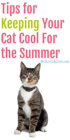 Cat Care Indoors Tips for Keeping Your Cat Cool for the Summer. These beat the heat ideas are great for both indoor and outdoor kitty cats! Little Kittens, Cats And Kittens, Kitty Cats, Tabby Cats, Cats 101, Cats Meowing, Cat Care Tips, Pet Care, Pet Tips