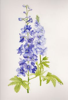 Delphinium- ability to transcend the bounds of space and time.Delphinium- ability to transcend the bounds of space and time. Delphinium Tattoo, Delphinium Flowers, Delphiniums, Irises, Larkspur Tattoo, Larkspur Flower, Watercolor Pictures, Watercolor Flowers, Watercolor Paintings