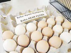 UPM hasil ayam Akar Putra Innovation, Dairy, Breakfast, Food, Breakfast Cafe, Essen, Yemek, Meals