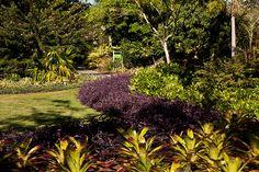 raymond jungles - Google Search
