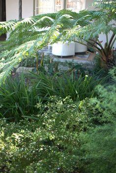 Glebe Native Front garden by Mallee Design