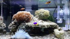 my new aquarium Saltwater