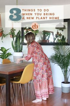 If you only read one thing today: 3 Things To Do When You Bring A New Plant Home #cleverbloom #plantcare #houseplants #mademesmile #sponsored Majesty Palm, Snake Plant Care, Palm Plant, Lower Lights, Eclectic Modern, Blooming Plants, Cool Plants, Plant Decor, Indoor Plants
