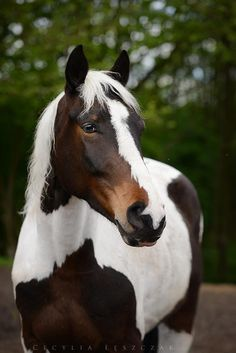 oh my goodness! i think i need a horse now