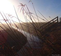 #fotografie #natuur #landelijk #zonsopkomst #mist #weiland #water #sloot #riet #Bolsward #Friesland
