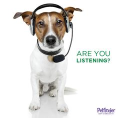 Do you know what your pet is telling you? Click through to learn.