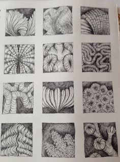 Pen drawing of natural forms inspired by Ernst Haeckel, by Julia Wright