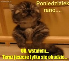 Best Memes, Jokes, Lol, Humor, Funny, Animals, Google, Pictures, Good Morning Funny