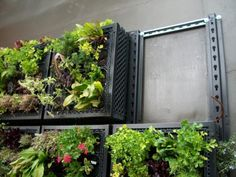 Elmich Vertical Greening Modules for Edible Wall Garden