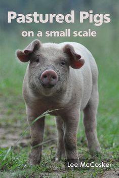 PROOF - Pasture Raised On Open Fields - Getting Started Livestock Farming, Pig Farming, Urban Farming, Farm Animals, Animals And Pets, Farm Plans, Pig Pen, Pet Pigs, Mini Farm