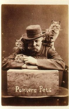 Adorable Vintage Cat Photos by English photographer: Harry Pointer
