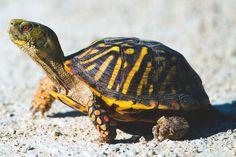 Resultado de imagen para tortuga Turtle, Image, Google, Turtles, Animales, Tortoise