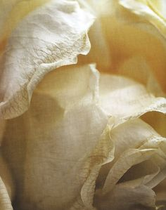 Utter perfection.Another flesh coloured rose to add to my blogs collection.