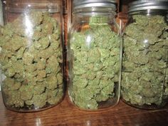 Buy top quality Cannabis Seeds from Seedsman. Our range of marijuana seeds is one of the largest online, with more than 3000 varieties of Cannabis Seeds. Cannabis Seeds For Sale, Buy Cannabis Online, Cannabis Oil, Growing Marijuana Indoor, Cannabis Growing, Growing Weed, Cannabis Cures Cancer, Shops, Shopping