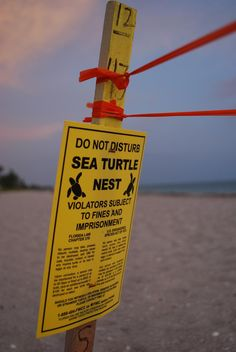 Protect the Sea Turtles! A familiar site along the beaches during the hatching season..