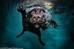 Barking bubbles