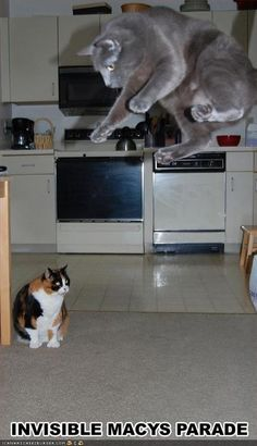 Invisible cat toys...