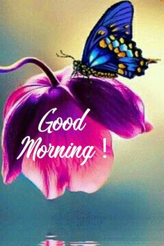 Good Morning Images Flowers, Good Morning Beautiful Images, Good Morning Images Hd, Good Morning Friends, Good Morning Good Night, Good Morning Wishes, Morning Messages, Morning Greeting, Good Morning Quotes