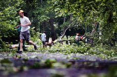 A Főkert Nonprofit Zrt. szakembere az előző napi viharban letört faágakat takarít el a budapesti Városligetben Fotó: Balogh Zoltán - MTI