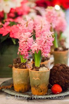 Hyacinth/Christmas flowers by Blomsterfrämjandet & Ingela Wall @blomsterverkstad /Minna Mercke Schmidt