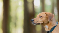 Riley - At Beaver Lake, Victoria BC Dog Photographer Gord Rufh