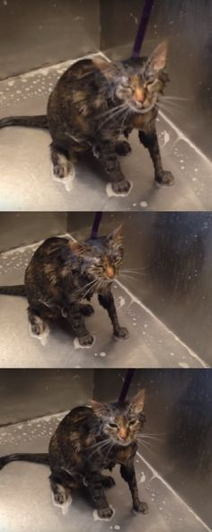Woman Gives Her Cat A Bath When She Hears Something Unbelievable. Then She Films This… (VIDEO)