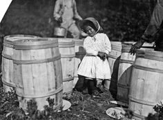 Lewis Hine, Mary Christmas, nearly 4 years old, picks cranberries sometimes - She is now picking up berries spilled at the barrels by Grandfather. Falmouth, Week's Bog, Massachusetts, 1911.