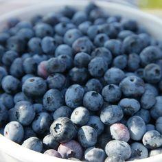 It's #blueberry season! #foodporn #food #strawberry #dessert #love #homemade #sweet #foodgasm #foodie #instafood #photo #summer #breakfast #cake #yummy #lovelife #healthy #cheesecake #vegan #baking  #raspberry #foodstagram #organic #fruit #blueberries #bl