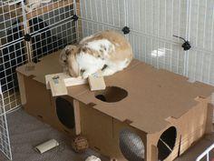 La cabane du lapin - La dure vie du lapin urbain