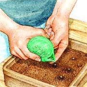 Semer le basilic sous abri A petites ou à grandes feuilles, le basilic est une plante condimentaire facile à cultiver. Il entre dans la composition de nombreux plats méditerranéens. Semez-le dès mars, pour le récolter en juin.