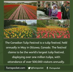 FACTS POCKET | The Canadian Tulip Festival is a tulip festival,...