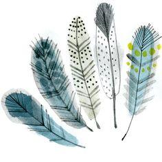 feathers - In my Backyard
