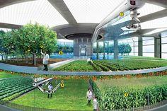 Fazendas verticais: uma nova solução para a implantação de agricultura nas cidades