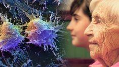 Especialistas del Instituto de Ciencia y Tecnología de Okinawa (OIST), situado en Japón está consiguiendo descifrar muchos de los secretos sobre el envejecimiento y como evitarlo, todo ello al catalogar la composición de la sangre de las personas mayores con muestras de personas más jóvenes. Según la revista científica Proceedings of Natural Academy Of Sciences …