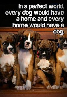 Receive excellent tips on boxer dogs. They are accessible for you on our web site. I Love Dogs, Puppy Love, Cute Dogs, Funny Dogs, Funny Boxer, Boxer And Baby, Boxer Love, Boxers, Boxer Puppies