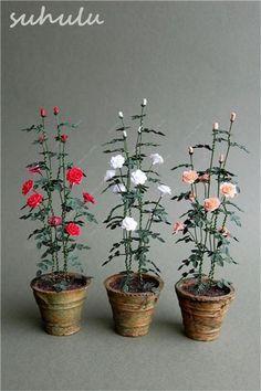 Multi-Color Fairy Garden Climbing Roses Bloom 200 Pcs Thailand Climbing Rose Shrub Seed Heirloom 'Pilgrim' Fragrant Garden Plant