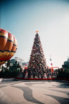 Christmas 2010, The Ocean Park, Hong Kong(2010)