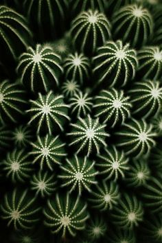 Pricked by a cactus thorn, now you are wondering if cactus poisonous is a thing or not. Here are some tips, tricks that will guide to cactus thorns. Cacti And Succulents, Planting Succulents, Planting Flowers, Succulent Arrangements, Succulent Terrarium, Succulents Garden, Succulent Care, Flowers Garden, Garden Plants