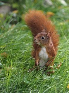 Fabulous Hallo zusammen auf dem Weg zur Haselnussernte in Nachbars Garten konnte ich diesen kleinen Kerl ablichten Gru Alfred