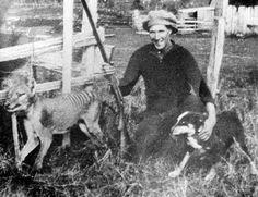 Wilf Batty posing with a thylacine, May 6 1930