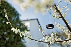 LED garden outdoor lighting album black pendant light cherry tree
