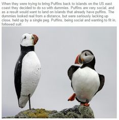 This is why I love puffins
