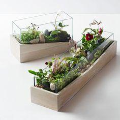 best-angled-wood-terrariums