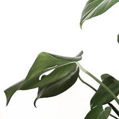 Summer vibes . Flora . Plants . Green . Plants . Leaf. Nature Photography .